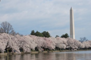 washington-in-spring